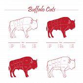 graphic buffalo meat cuts scheme on blackboard poster