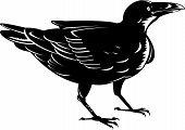 vector illustration of a black Raven bird poster
