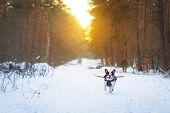French bulldog in winter jacket on the walk in forest poster