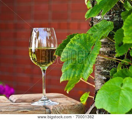 White Wine In Vineyard