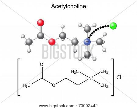 Structural Chemical Formula And Model Of Acetylcholine