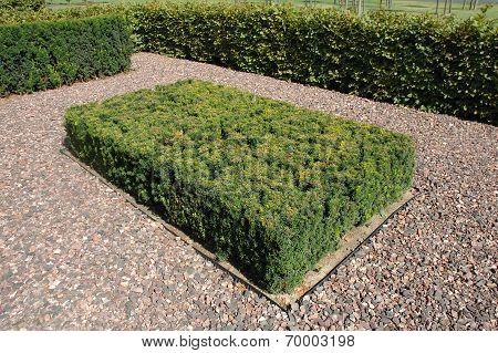 Green Square Hedge