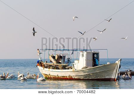 Fishing Boat And The Fisherman Surrounded By Seagulls And Pelicans, In Greece.