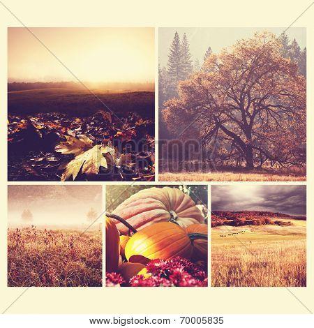 autumn orange collage