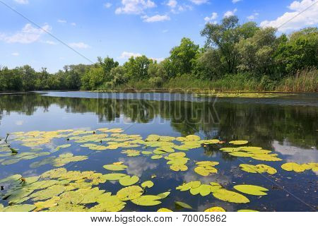 Summer scene on lake in nice sunny day