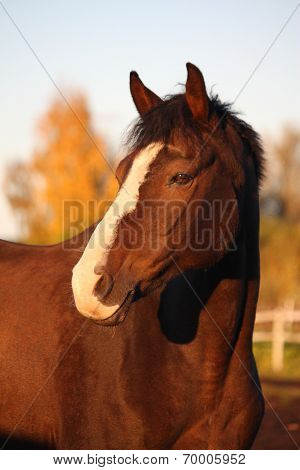 Brown Horse Portrait In Autumn
