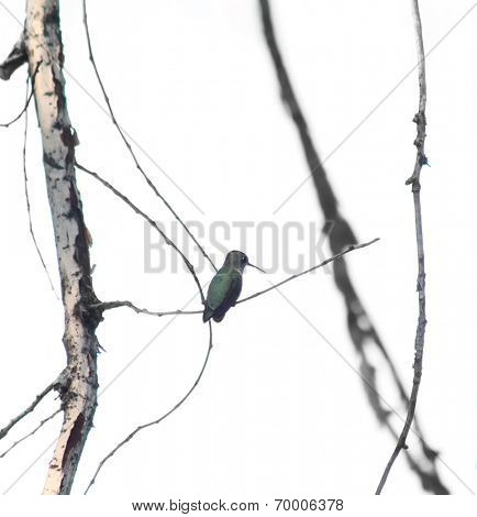 an artistic shot of a tiny hummingbird sitting on a small branch