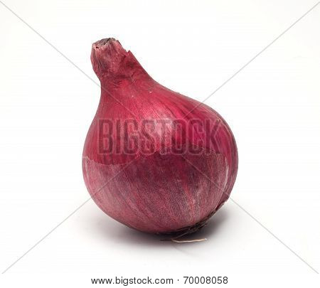 Tasty Red Yalta Onion