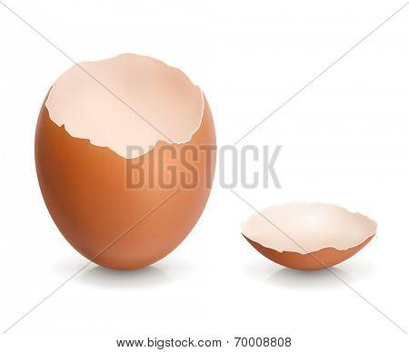 Eggshell, vector illustration
