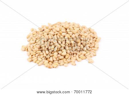 Bunch of pine nuts.