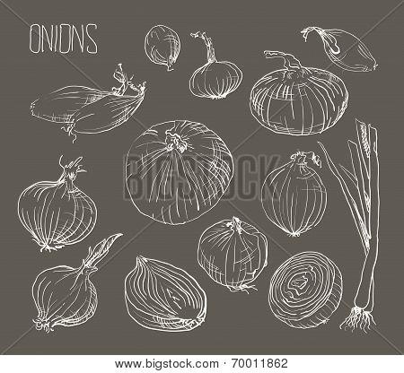 vector illustration of retro organic Onions set
