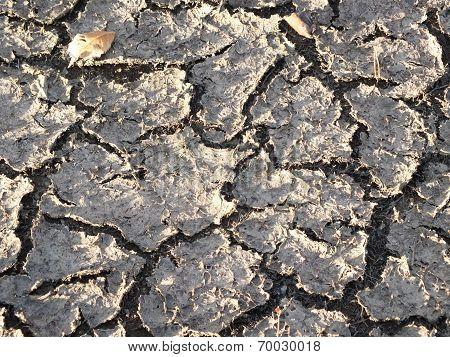 Cracked soil crust