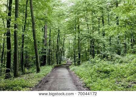 Way Through The Green Forest