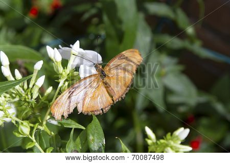 Butterfly, Feeding, From Above