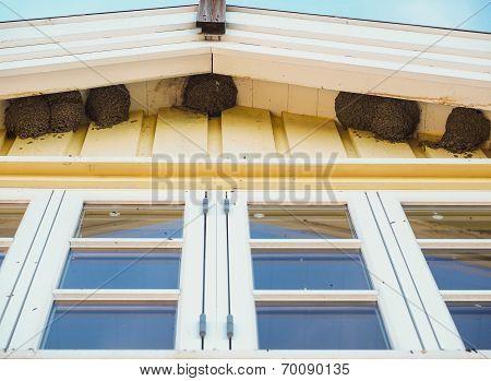 Delichon Urbica Birds Nesting Under The Eaves Over Blue Windows Under Blue Sky At Summer