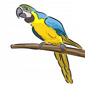 Editable vector illustration of a macaw parrot in felt pen style on a white background poster