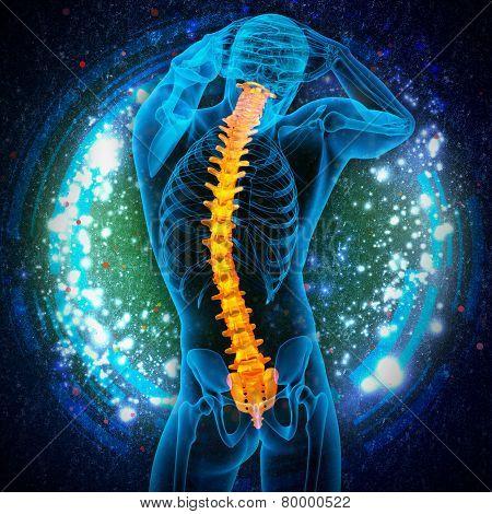3d render medical illustration of the human spine - back view poster