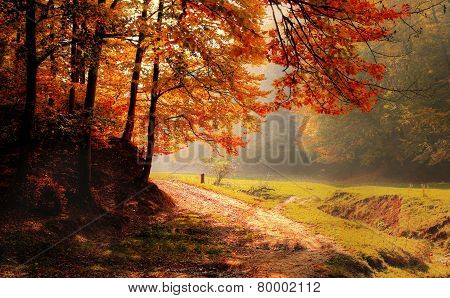 Road along autumn forest