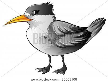 Illustration of a close up bird