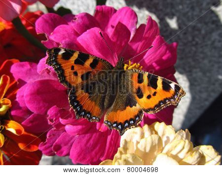 butterfly on the pink blooms