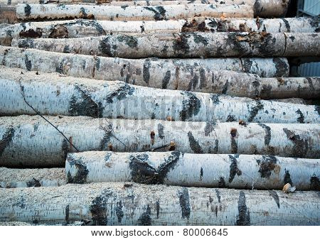 Texture sawn ancient birch.