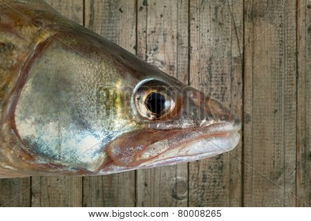 fish head wood background isolated clipping path
