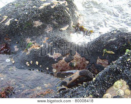 Just below the water line