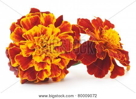 Yellow Flowers Isolated