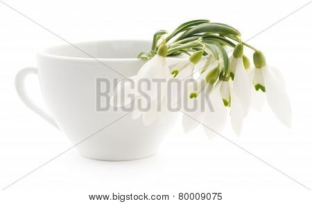 Snowdrops In Cup