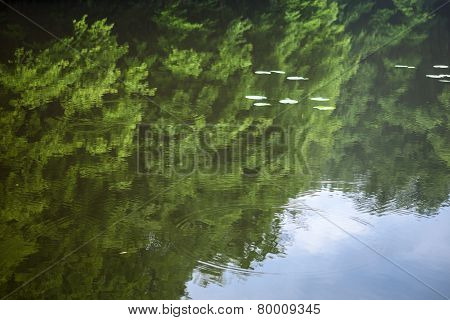 Green Summer Trees Reflected In The Water