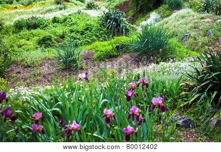Vegetation In The Green Spring Garden