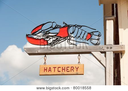 Lobster hatchery