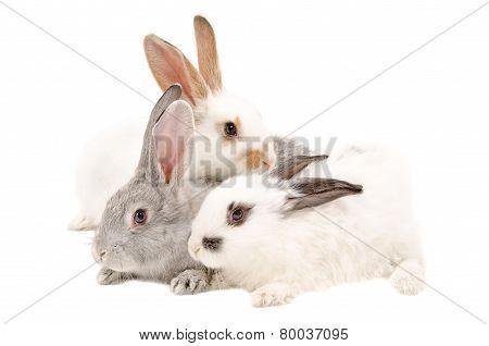 The three rabbits