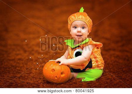 Autumn Baby Pumpkin