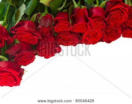 border of fresh crimson red garden roses