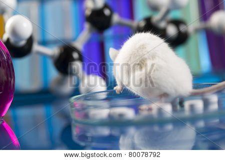 Workplace modern laboratory for molecular biology test on blue background