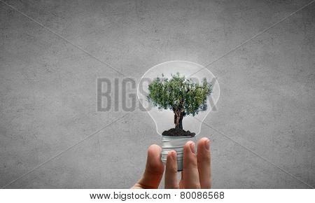 Close up of hand holding light bulb with tree inside