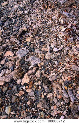 Coral Rock Background Virgin Islands