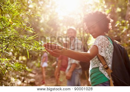 Woman Examining Leaves On Plant During Countryside Walk