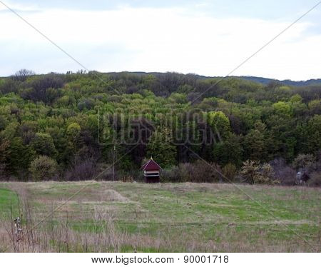 Forest And Meadow