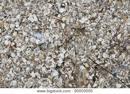 Carcass Of  Shell