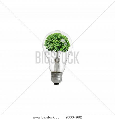 Green Tree inside of the light bulb isolated on white