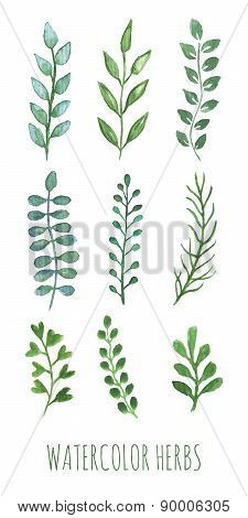 Hand painted water color herbs.