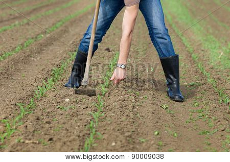 Weeding Corn Field