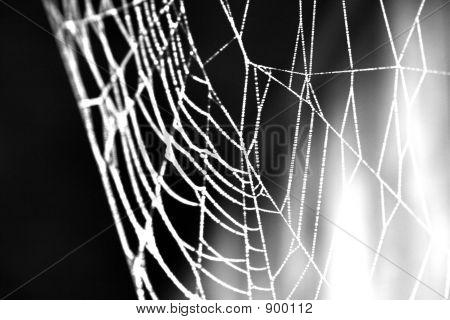 Frozen Web
