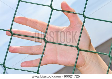 Hand Anf Fence
