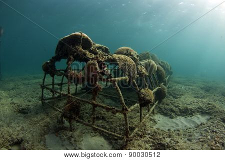 Artificial reefs in Ft. Lauderdale Florida are creating a buzz. They use solar panels to create a small electric charge that helps budding corals grow on submerged rebar. ** Note: Visible grain at 100%, best at smaller sizes