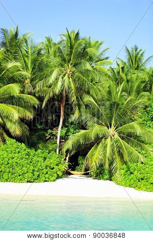 Beautiful view of coast with exotic trees in resort