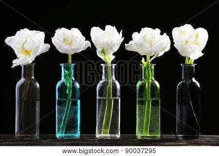 Fresh tulips in glass vases on black background