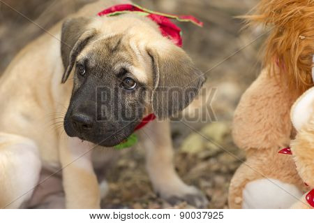 Pouting Sad Cute Puppy Outdoors